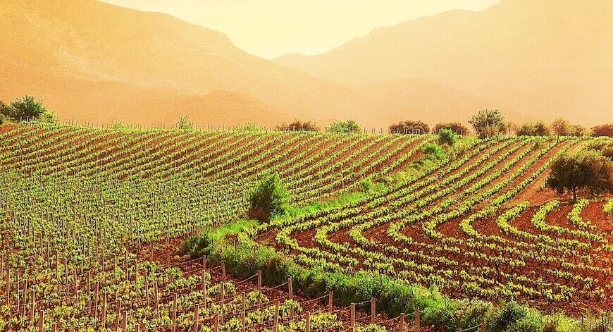 Wein aus Lombardei Bio Wein aus Lombardei kaufen biodynamico.chbio wein kaufen bio wein online kaufen italienischen wein kaufen wein ohne sulfite kaufen biodynamischer wein kaufen biologischer wein kaufen bio weisswein kaufen biowein kaufen bioweine kaufen bioweine online kaufen