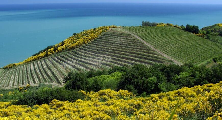 kasse Wein aus Marken Bio Wein aus Marken kaufen biodynamico.ch