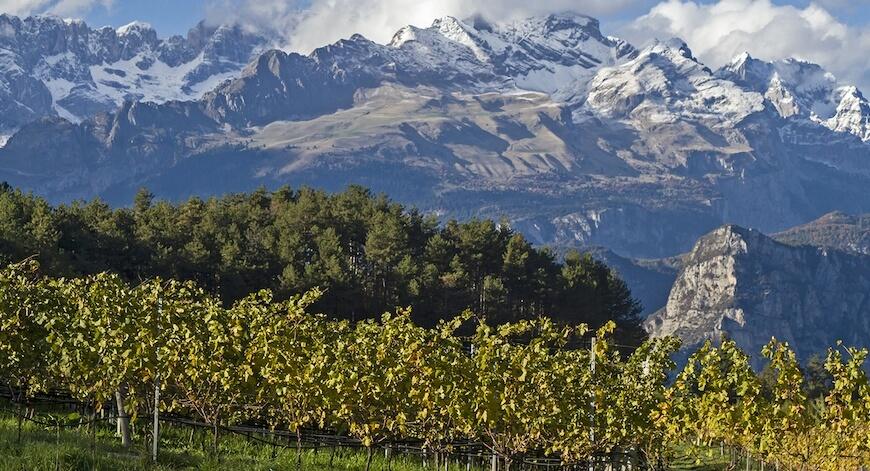 wunschliste Wein aus Trentino Bio Wein aus Trentino kaufen biodynamico.chbio wein kaufen bio wein online kaufen italienischen wein kaufen wein ohne sulfite kaufen biodynamischer wein kaufen biologischer wein kaufen bio weisswein kaufen biowein kaufen bioweine kaufen bioweine online kaufen