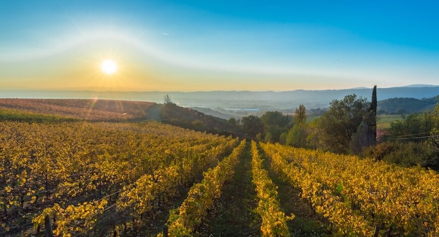 Wein aus Umbrien Bio Wein aus Umbrien kaufen biodynamico.ch