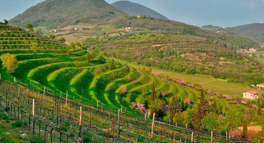 Wein aus Venetien Bio Wein aus Venetien kaufen biodynamico.ch bio wein kaufen bio wein online kaufen italienischen wein kaufen wein ohne sulfite kaufen biodynamischer wein kaufen biologischer wein kaufen bio weisswein kaufen biowein kaufen bioweine kaufen bioweine online kaufen