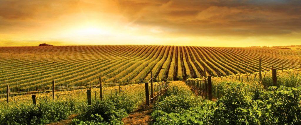 bio wein aus italien wein kaufen biowein kaufen biologischer wein biodynamischer wein biodynamico spitzenweine vegan weine
