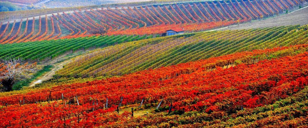 Warenkorb bio wein aus italien wein kaufen biowein kaufen biologischer wein biodynamischer wein biodynamico spitzenweine vegan weine