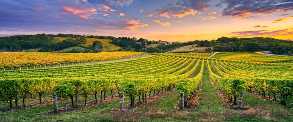 biologische und biodynamische weine bio wein aus italien wein kaufen biowein kaufen biologischer wein biodynamischer wein biodynamico spitzenweine vegan weine