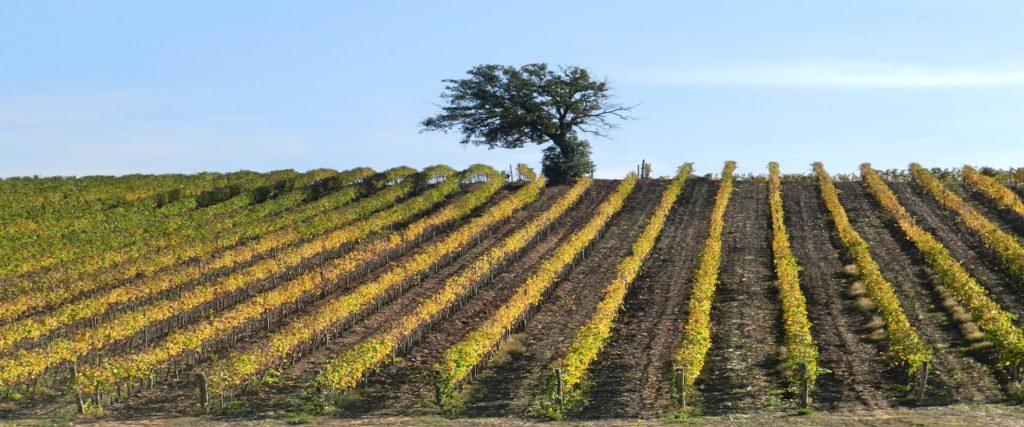 Biodynamische Spitzenweine Italien bio wein aus italien wein kaufen biowein kaufen biologischer wein biodynamischer wein biodynamico spitzenweine vegan weine