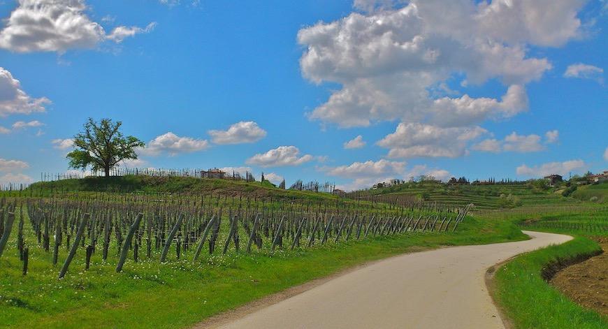 kostenlose lieferung Wein aus Friaul Bio Wein aus Friaul kaufen biodynamico.ch bio wein kaufen bio wein online kaufen italienischen wein kaufen wein ohne sulfite kaufen biodynamischer wein kaufen biologischer wein kaufen bio weisswein kaufen biowein kaufen bioweine kaufen bioweine online kaufen